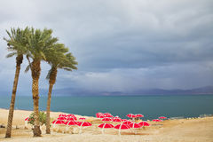 The palm trees and beach canopies on a beach Royalty Free Stock Images
