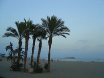 Palm trees on a beach in Carboneras, Almeria royalty free stock images