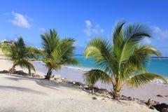 Palm trees on beach Stock Photos
