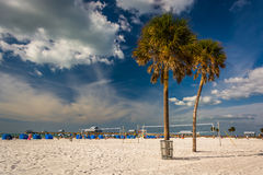 Palm trees on the beach in Clearwater Beach, Florida. Stock Images