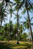 Palm trees on a beach Stock Photography