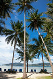 Palm trees, beach and deck chairs Stock Photography