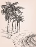 Palm trees on the beach drawing. Lateral sea shore view stock illustration