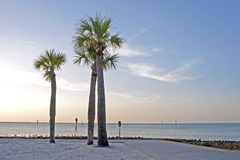 Palm trees on the beach at dusk Royalty Free Stock Photography