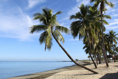 Palm trees on beach. In Fiji royalty free stock photography