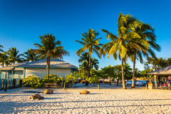Palm trees on the beach in Fort Myers Beach, Florida. Stock Photography