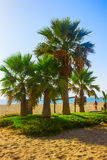 Palm trees on a beach in Fuengirola, Spain Royalty Free Stock Photography