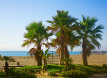 Palm trees on a beach in Fuengirola, Spain Royalty Free Stock Image