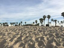 Palm trees on the beach. Palm trees on the horizon at Venice Beach, California Royalty Free Stock Images