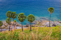 Palm trees on the beach on the island of Phuket Stock Photography