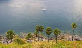 Palm trees on the beach on the island of Phuket Stock Photos