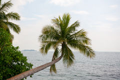 Palm trees on the beach on the island Stock Photo