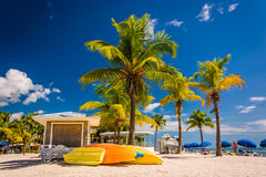 Palm trees on the beach in Key West, Florida. Royalty Free Stock Photo