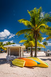 Palm trees on the beach in Key West, Florida. Stock Images
