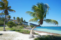 Palm trees on the beach. Landscape with palm trees on the beach with white sand, turquoise water and ruins of old seven mile bridge and clear blue sky on the Stock Photos