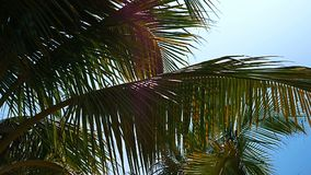 Palm trees on the beach, light wind on hot summer day. Colorful stock video footage