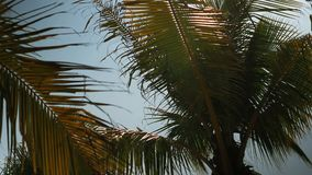 Palm trees on the beach, light wind on hot summer day. Colorful stock video