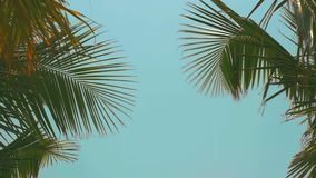Palm trees on the beach, light wind on hot summer day. Colorful stock footage