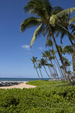 Palm trees on the beach Maui Royalty Free Stock Photography