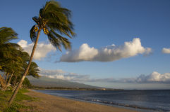 Palm trees on the beach Maui Royalty Free Stock Image