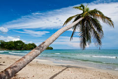 Palm trees on the beach near with blue sky Stock Photography