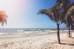 Palm trees and beach Royalty Free Stock Image