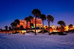 Palm trees on the beach at night in Clearwater Beach, Florida. Royalty Free Stock Photos