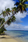 Palm trees on a beach of Ofu island, Tonga Stock Images