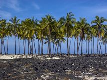Palm trees on beach. Palm trees on coast of big island Hawaii, beach Royalty Free Stock Photos