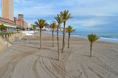 Palm Trees On The Beach - Deserted And Sindswept Sands Stock Photos