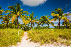 Palm trees and beach path at Smathers Beach, Key West, Florida. Royalty Free Stock Photos