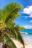 Palm trees beach at Praslin island, Seychelles Royalty Free Stock Photography