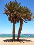 Palm trees on beach. Sea, sky, boat, sunny day. Dahab, Sinai, Eg. Palm trees at beach. Sea, sky, sunny day in Dahab, Egypt, Red Sea Stock Photo