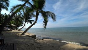 Palm trees on the beach and the sea. Palm trees under the wind on the beach in clear sunny weather against the sea stock video footage