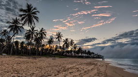 Palm Trees Beside Beach Shore during Sunset Royalty Free Stock Photography