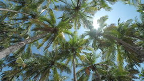 Palm trees on the beach. With sky. Camera spins stock footage