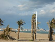 Palm trees on the beach in Spain stock photography