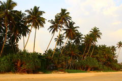 Palm trees and beach Royalty Free Stock Photos