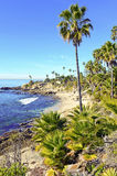 Palm Trees at the Beach. On sunny day, Southern California, USA Stock Photography