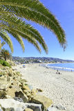 Palm Trees at the Beach. On sunny day, Southern California, USA Stock Photos
