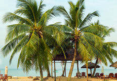 Palm trees or beach. Palm trees on the Sunrise Tropical beach Royalty Free Stock Images