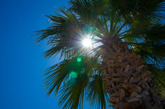 Palm trees at beach Royalty Free Stock Photos