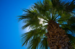 Palm trees at beach Royalty Free Stock Images