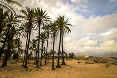 Palm trees on the beach royalty free stock photo