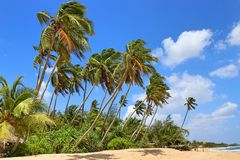 Palm trees on the beach, surrounded by green bushes, some coconuts. The sea comes in a gentle wave to the beach and white clouds hang in the sky Royalty Free Stock Photography