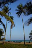 Palm trees on the beach of Togo in Aneho royalty free stock images