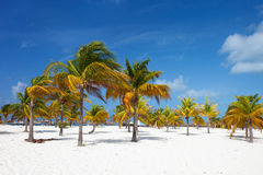 Palm trees at beach Stock Image