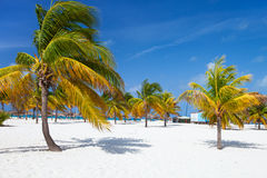 Palm trees at beach Royalty Free Stock Photos