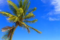 Palm trees on the beach. Stock Photo