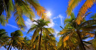 Palm trees on the beach. Royalty Free Stock Images